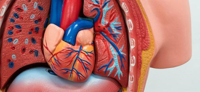 heart (4).jpg