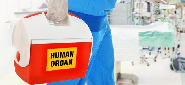 organs.jpg