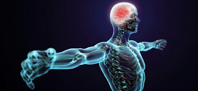 Computational Life - the-human-body.jpg