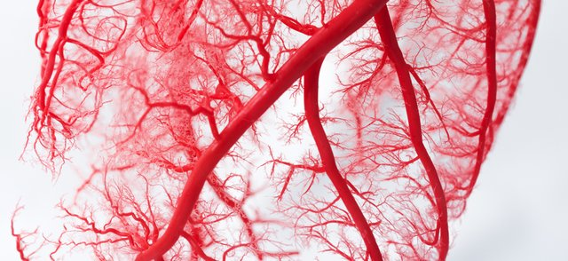 bloodvessels.png