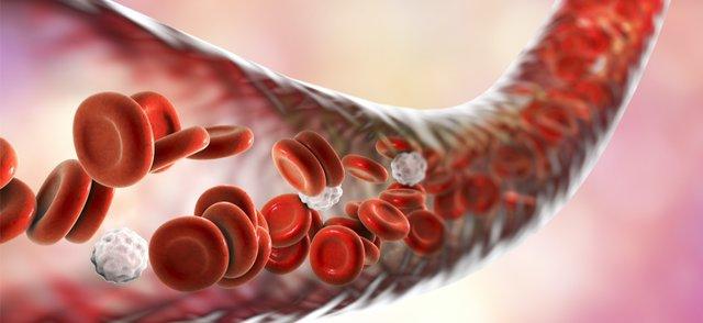 blood vessels.png