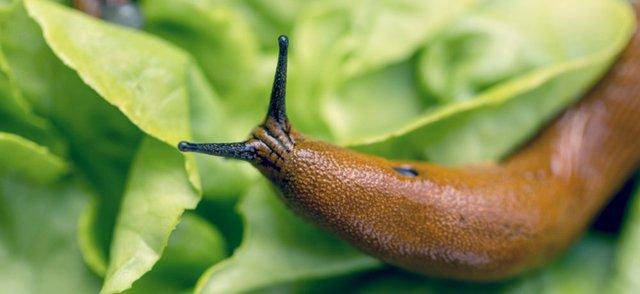 Adhesive Slug.jpg
