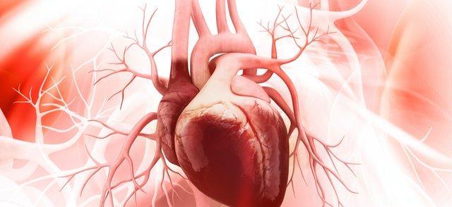 heart valve.png