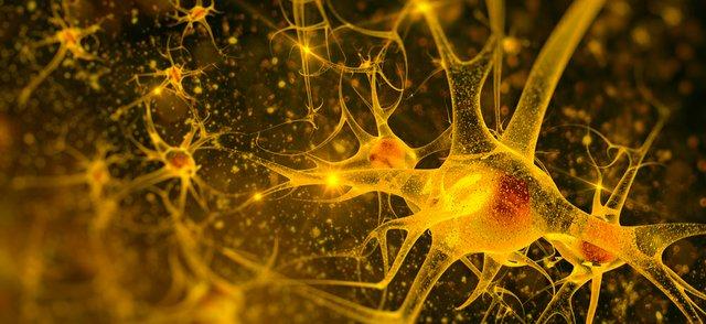 Nerve generation